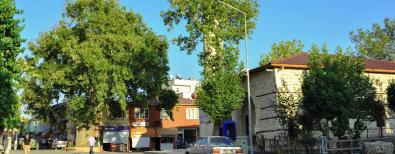 600 Yıllık Çınar Ağacı